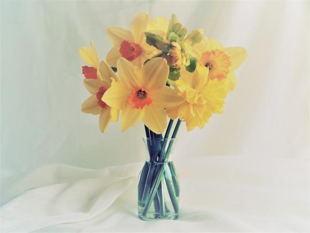 1月の誕生石・誕生花をご紹介!それぞれに込められた意味とは?