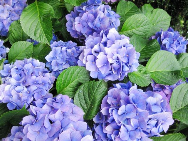 6月の旬な物をご紹介!6月が旬の花や食べ物、行事などをまとめてご紹介!