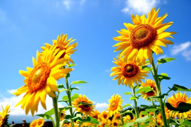 8月の誕生石・誕生花をご紹介!それぞれに込められた意味とは?