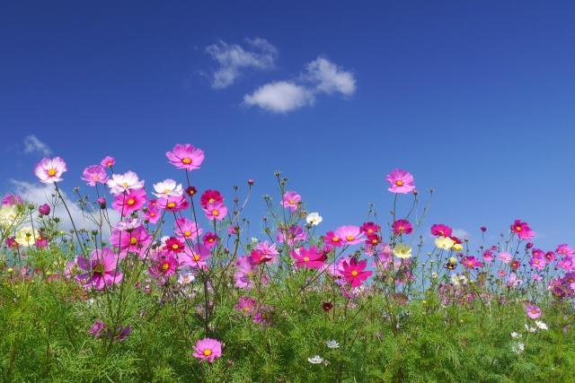9月が旬の花や食べ物、行事などをまとめてご紹介!