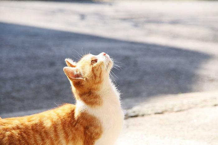 猫好きさんは5月のベルギー祭りに行こう!あっちもこっちも猫だらけ!?