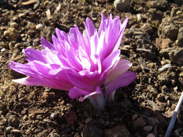 要注意!間違えやすい有毒植物の見分け方と基本的な特徴をご紹介!