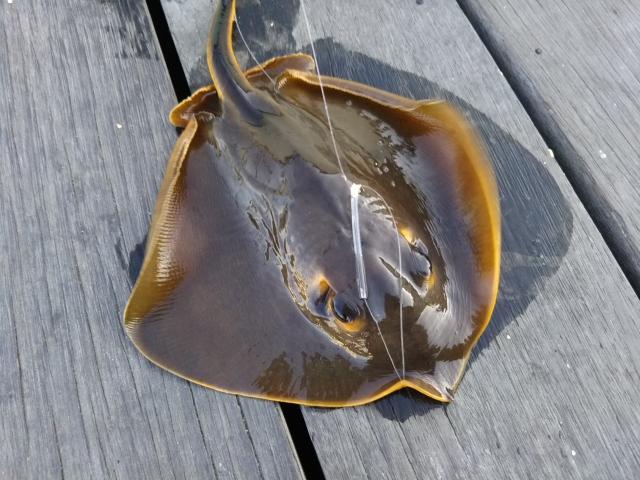 毒を持っている魚の種類~毒を持っている魚にはどんな種類がいるの?~