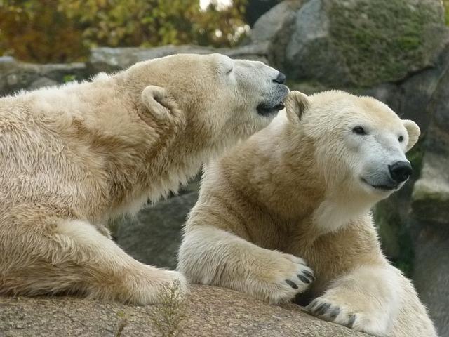 愛媛県のとべ動物園をオススメしたくなる注目すべきポイント3つ