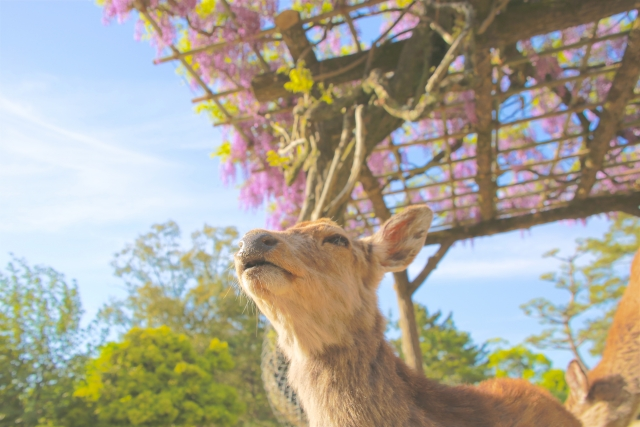ゴールデンウィークは奈良へ行こう!オススメの観光スポットをご紹介!