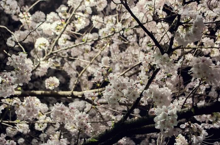 春の行事・イベントNo.1 お花見イベント