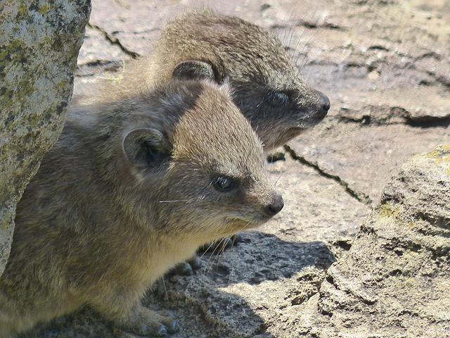 広島県の福山市立動物園を満喫するオススメポイント3つ