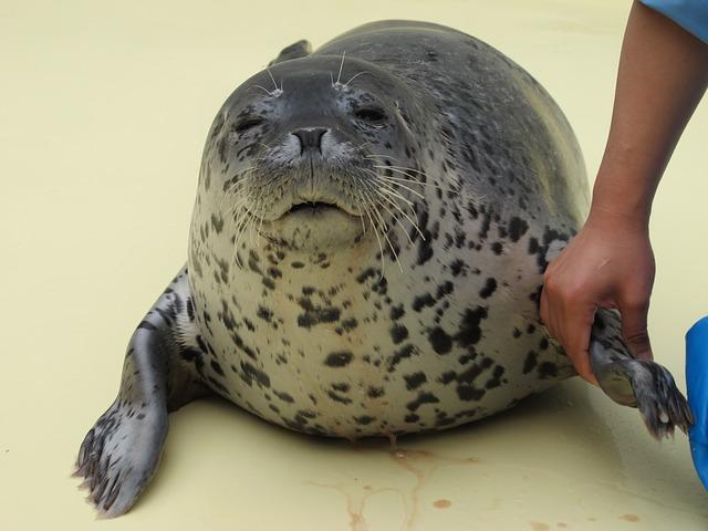 福井県の越前松島水族館を満喫するオススメすべきポイント3つ