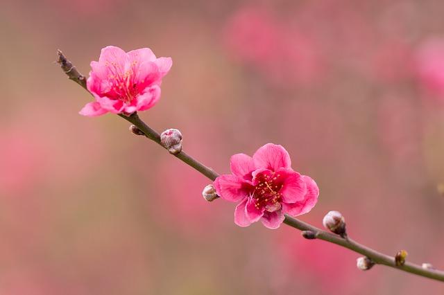 福岡県の宇美八幡宮を満喫し尽くす3つのオススメポイント