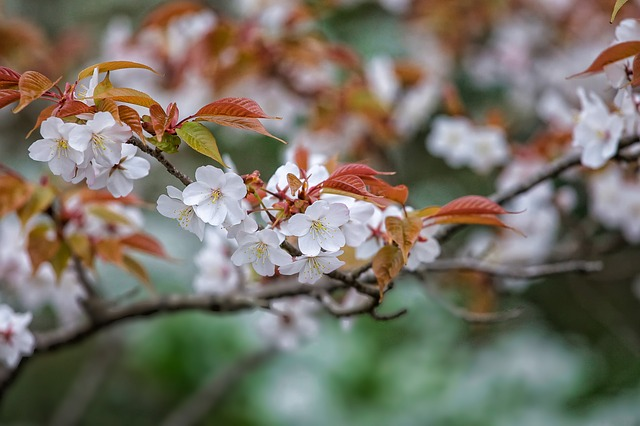 茨城県の水戸市森林公園をオススメしたくなる3つの注目のポイント