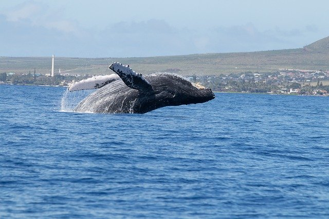 鹿児島県の加計呂麻島を楽しみ尽くす3つのオススメポイント