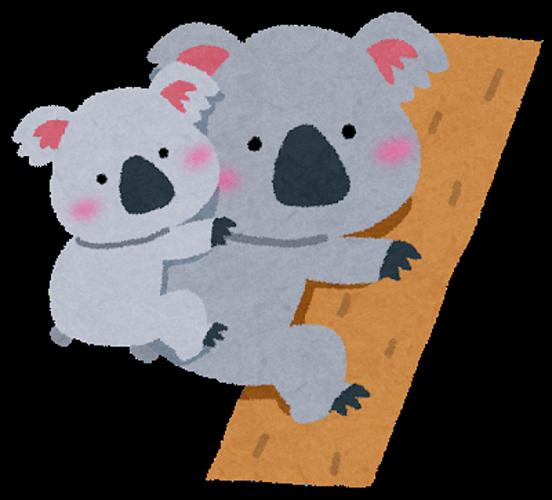 有袋類のコアラは毒入りの葉を食べても平気!亡くなる理由は栄養失調?