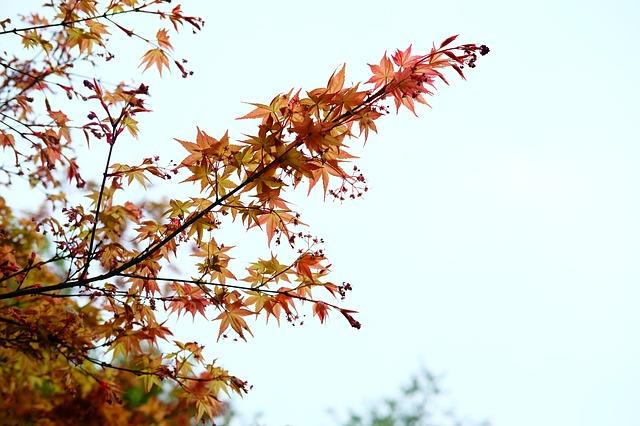 熊本県の菊池渓谷を楽しく巡るためのオススメすへき3つのポイント