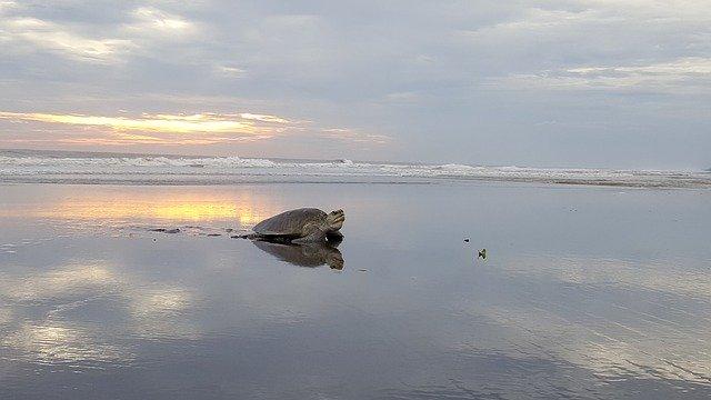 三重県のウミガメ公園を満喫するための3つのオススメポイント
