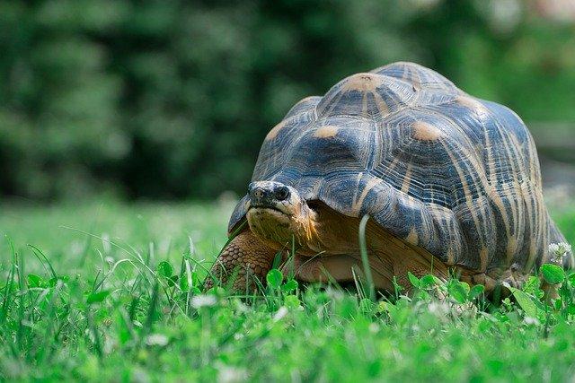 宮城県の八木山動物公園を満喫するためのオススメのポイント3つ