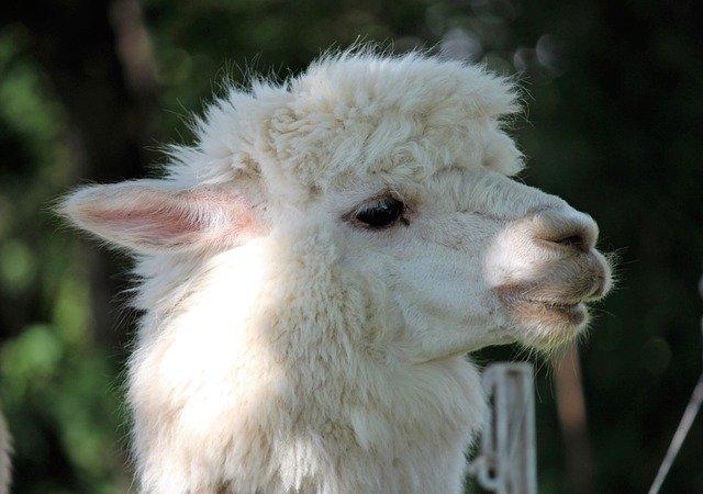 盛岡市動物公園を満喫するためのオススメすべき3つの注目ポイント