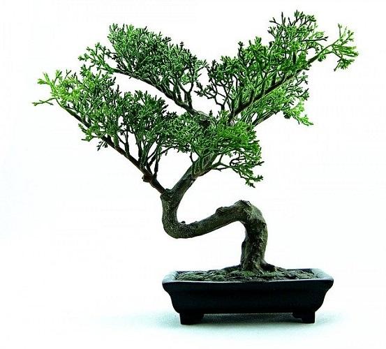 埼玉県の大宮盆栽美術館を満喫するオススメすべきポイント3つ