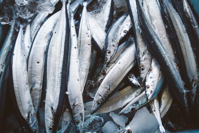 季節ごとの旬の魚~秋が旬の魚にはどんな種類がいるの?~