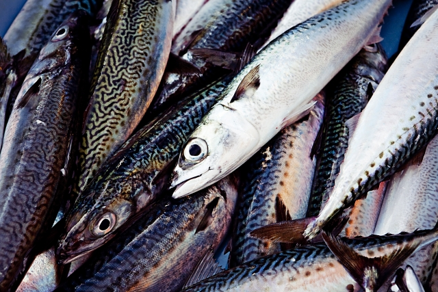 魚にはどんな栄養が含まれているの?