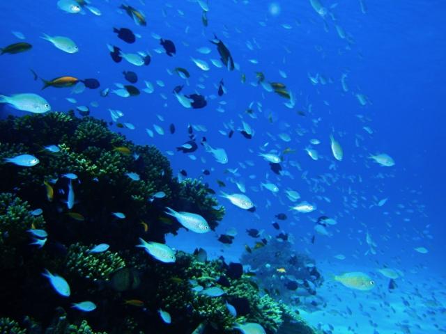 夏が旬の魚の代表といえば、ウナギではないでしょうか。