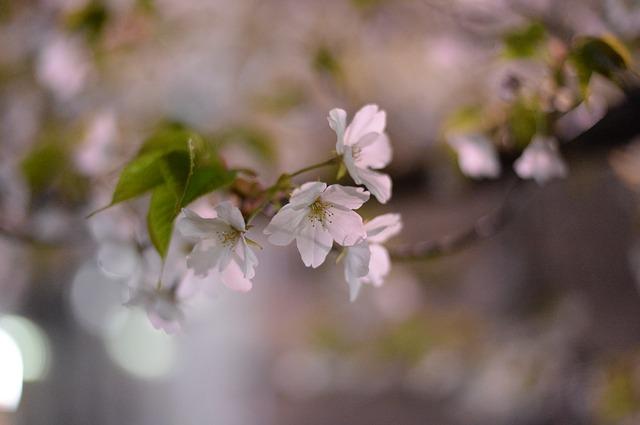 広島県の千光寺公園を巡るオススメしておきたい注目のポイント3つ