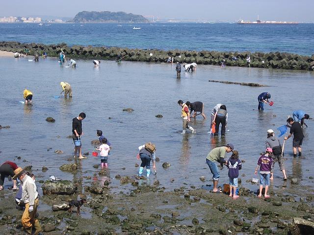 大阪府のせんなん里海公園を楽しみ尽くすためのオススメポイント3つ