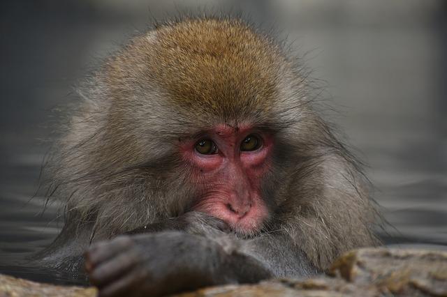 大分県の高崎山自然動物園を楽しむための3つのオススメのポイント