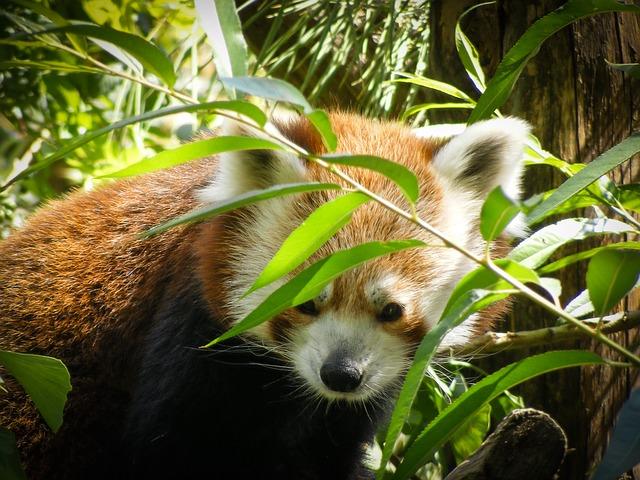 徳島県のとくしま動物園を満喫する3つのオススメポイント