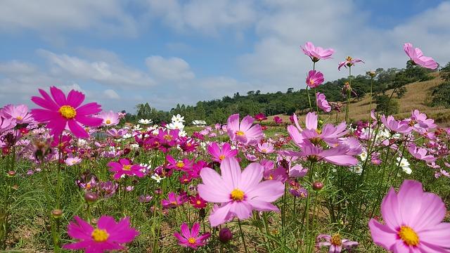 徳島県の鳴門ウチノ海総合公園をオススメする3つのポイント