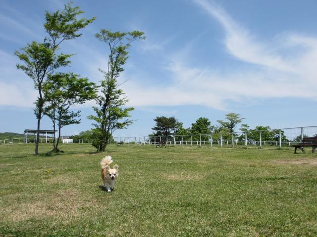 栃木県の那須どうぶつ王国をオススメしたくなる注目ポイント3つ