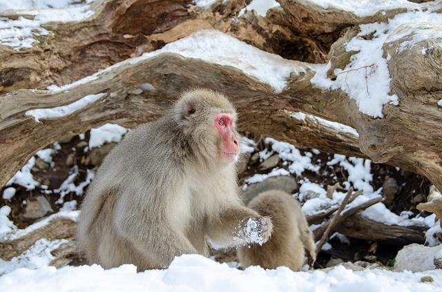 栃木県の日光国立公園を楽しみ尽くすためのオススメポイント3つ