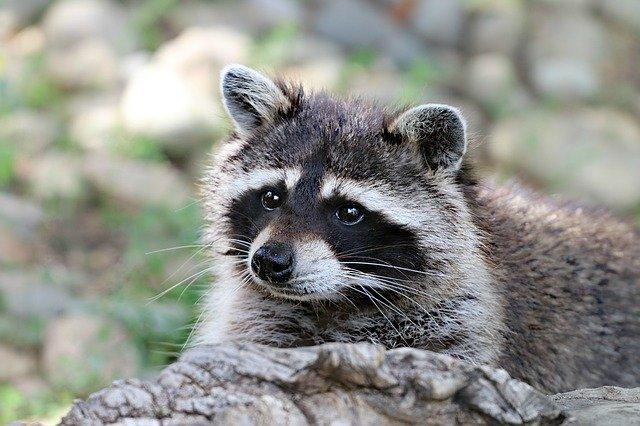栃木県・宇都宮動物園をオススメしたくなる魅力的なポイント3つ