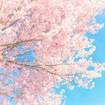 春の風物詩といえば?人気ランキングベスト5!
