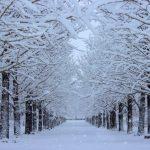 冬の風物詩といえば?人気ランキングベスト5!