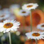 花粉を迎え撃て!一人暮らしの免疫力を底上げしてくれる3つのポイント