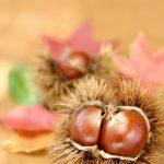 秋の味覚といえば?秋が旬の食材、秋に食べたい食材は?