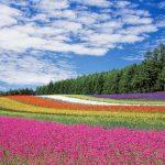 宮城県・加美郡の「やくらいガーデン」で豊かな四季を満喫しよう!