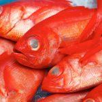 季節ごとの旬の魚~春が旬の魚にはどんな種類がいるの?~
