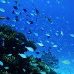 季節ごとの旬の魚~夏が旬の魚にはどんな種類がいるの?~
