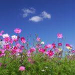 9月,旬の花,食べ物,行事