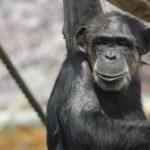 知能の高い動物にはどんな種類がいるの?
