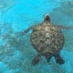 鹿児島県のいおワールドかごしま水族館をオススメする3つのポイント
