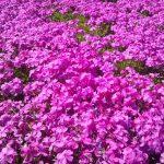 広島県の世羅高原農場を楽しみ尽くすオススメしたい3つのポイント