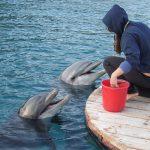 香川県の日本ドルフィンセンターを満喫する3つのオススメポイント