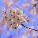 大阪府の久宝寺緑地を楽しみ尽くす注目すべきオススメのポイント3つ