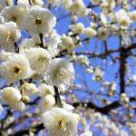 1月の旬な物をご紹介!1月が旬の花や食べ物、行事などをまとめてご紹介!