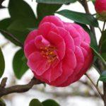 2月の旬な物をご紹介!2月が旬の花や食べ物、行事などをまとめてご紹介!