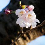 4月の旬な物をご紹介!4月が旬の花や食べ物、行事などをまとめてご紹介!