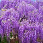 5月の旬な物をご紹介!5月が旬の花や食べ物、行事などをまとめてご紹介!