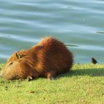 愛知県の竹島水族館をオススメしたくなる3つの注目ポイントについて
